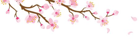 Illustration pour Cherry blossom Branch and Falling Petals - image libre de droit