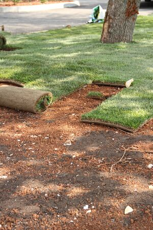 Photo for New lawn is relocated - Royalty Free Image