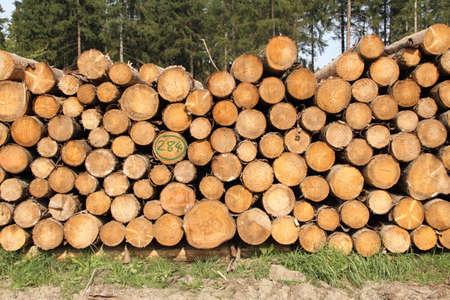 Photo pour a freshly felled wooden pile in the forest - image libre de droit