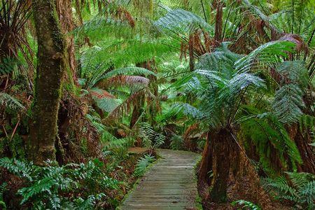 Pathway in rain forest, Australia
