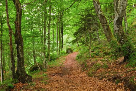 Green mountain forest in Pyrenees