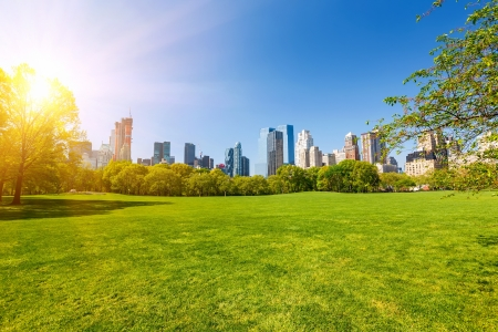 Central park at sunny day, New York