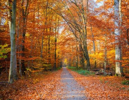 Photo pour Pathway through the autumn forest - image libre de droit