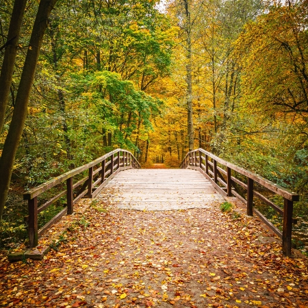 Wooden bridge in the autumn forestの写真素材