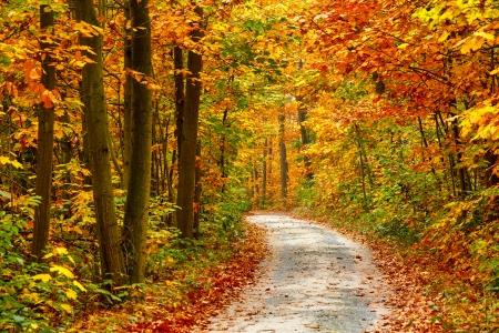 Photo pour Pathway in the colorful autumn forest - image libre de droit
