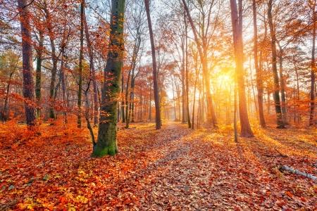Photo pour Colorful and foggy autumn forest - image libre de droit