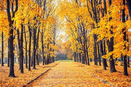 Photo pour Alley in the bright autumn park - image libre de droit