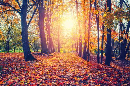 Photo pour Alley in the sunny autumn park - image libre de droit