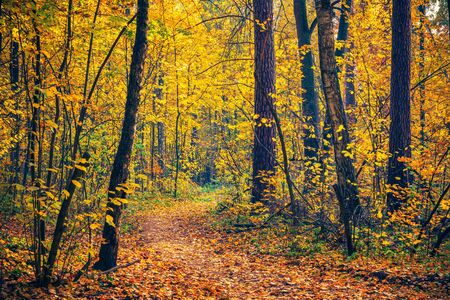 Photo pour Pathway in the bright autumn forest - image libre de droit