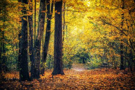 Photo pour Pathway in the bright autumn park - image libre de droit