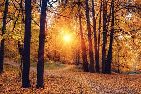Photo pour Pathway in the sunny autumn park - image libre de droit
