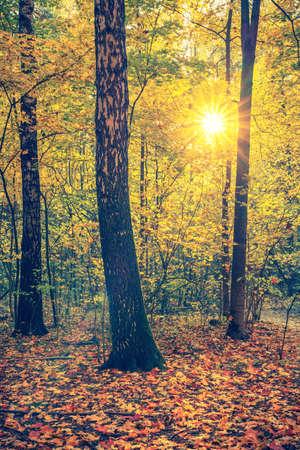 Photo pour Bright trees in the autumn park at sunset - image libre de droit