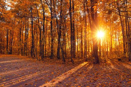 Photo pour Bright trees in the sunny autumn park - image libre de droit