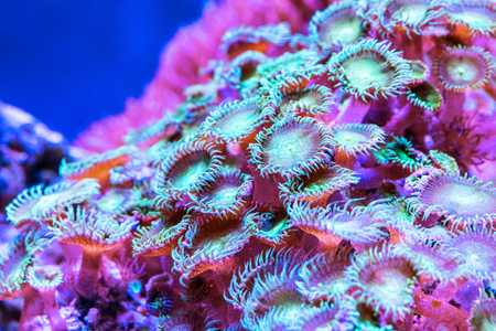 Scenic macro view of the color corals in underwater exotic tropical sea resort