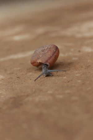 snail on the floor