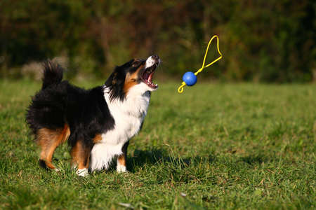 dog catching a ball
