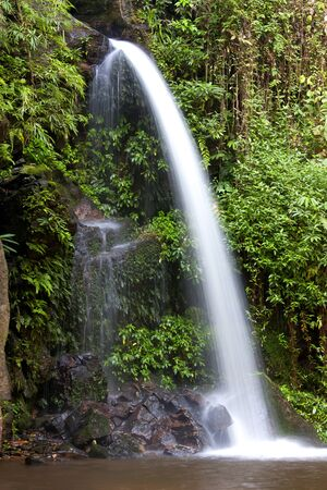 Monta waterfall creek nature of these en room tapioca root fresh tropical greenery