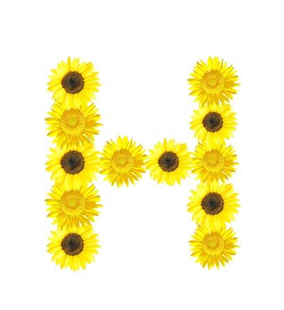 Sunflower alphabet H isolated on white background.