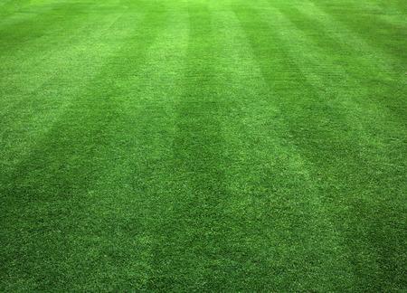 Green Grass Lawn natural patterns background texture.