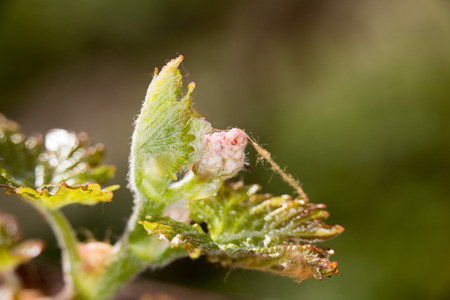 small grape leaves in nature