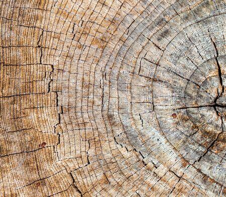 Photo pour Stump from a sawn tree in nature. - image libre de droit