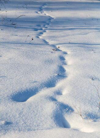 Photo for Animal tracks on white snow in winter. - Royalty Free Image