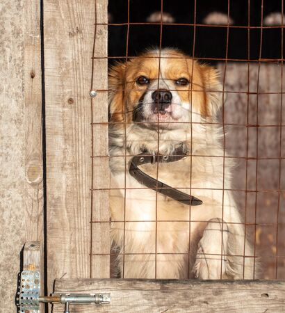 Photo for Portrait of a dog behind a fence in a booth. - Royalty Free Image