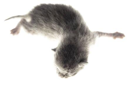 Photo pour Little newborn kitten isolated on a white background. Pet - image libre de droit