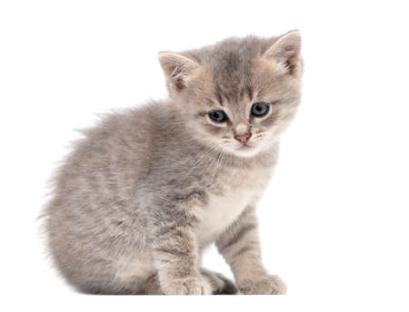 Photo for Little fluffy kitten isolated on a white background. - Royalty Free Image