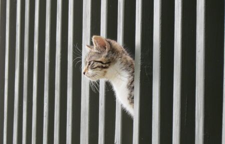 Kitten looking through railing