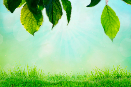 Photo for Sky and grass background, fresh green fields under the blue sky in spring. - Royalty Free Image