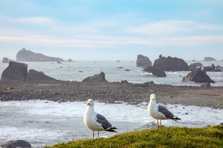 America rugged Pacific coast in Oregon Florence