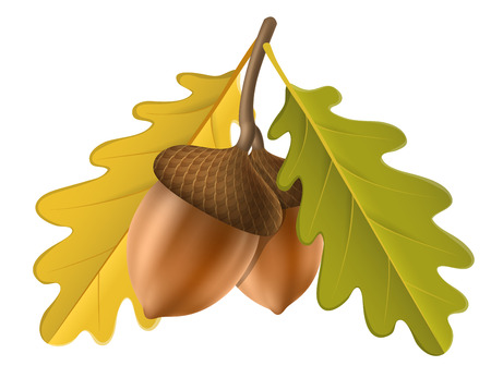 Illustration pour Realistic acorn with yellow oak leaf. Vector illustration isolated on white for fall and autumn nature design - image libre de droit