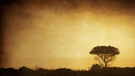 The silhouette of an old oak tree along the Calfornia coastline with a sepia-toned, vintage paper background.  The image displays a pleasing paper grain and fibers at 100%.