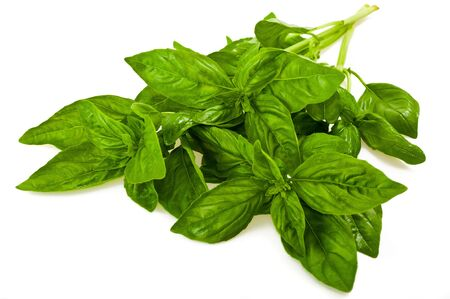 bunch of basil isolated on white