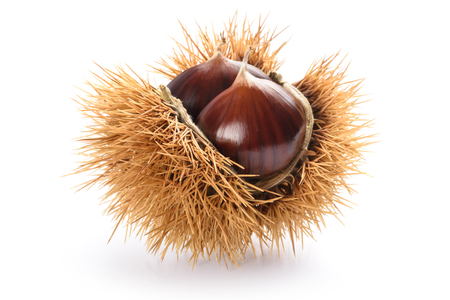 Fresh sweet chestnuts in the shell isolated on white