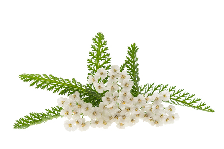 Photo pour White yarrow flowers isolated on white background. - image libre de droit