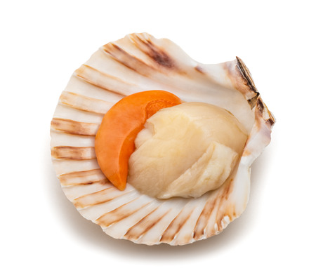 Photo pour fresh shell scallop isolated on white background - image libre de droit