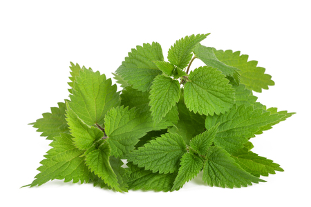 Photo pour Fresh nettles  isolated on white background - image libre de droit