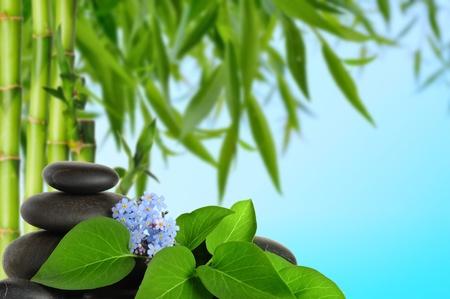 spa concept zen basalt stones and  flowers