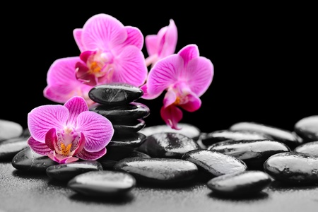 zen basalt stones and orchid with dewの写真素材