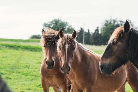 Foto de group of horses looking at camera - Imagen libre de derechos