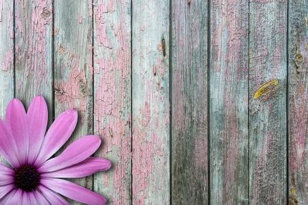 violet flower on vintage wooden background
