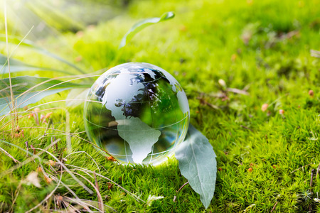 Foto per Crystal globe resting on moss in a forest. - Immagine Royalty Free