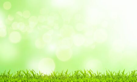 Photo pour Easter concept. Green grass and blurred green background on a sunny day.  - image libre de droit