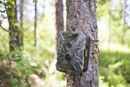 Photo pour Camera traps with infrared light and a motion detector attached by straps on a tree photograph animals in the Siberian taiga. - image libre de droit