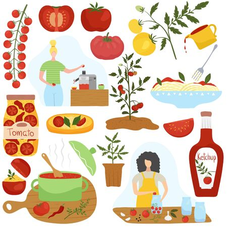 Illustration for Tomato ingredient in different dishes, home cooking vector illustration. Homemade food, healthy vegetarian dish, Italian cuisine. Set of icons and stickers in modern flat style. Tomato sauce and pasta - Royalty Free Image