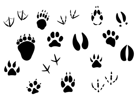 Animal footprints and tracks isolated on white for wildlife concept design