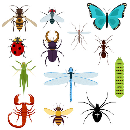 Colorful top view insects icons with bee, grasshopper, ant, fly, dragonfly, ladybird, spider, mosquito, caterpillar, stag beetle and scorpion. Isolated on white