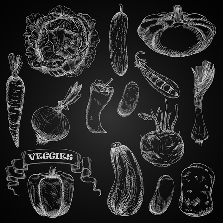 Illustration pour Sketches of fresh farm vegetables chalked on a blackboard with cabbage and carrot, chilli and bell peppers, onion and potato, cucumber and  pea, beans, kohlrabi and leek, zucchini and pattypan squash, decorated by swirling ribbon banner - image libre de droit